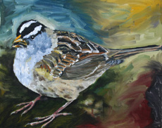 White Crowned Sparrow, 16 x 20 inches, $200.00